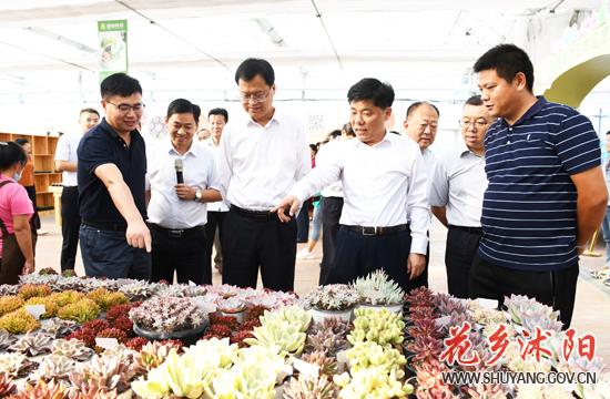 人社部领导来沭阳县调研文化产业和花木电商发展情况