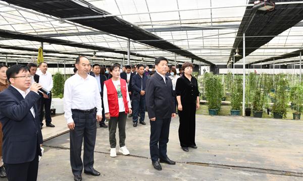 彭伟带队现场观摩推进乡村振兴重点项目