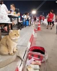 猫坐在路边等主人吃饭,居然有人往猫包里扔钱?猫咪都气叫了