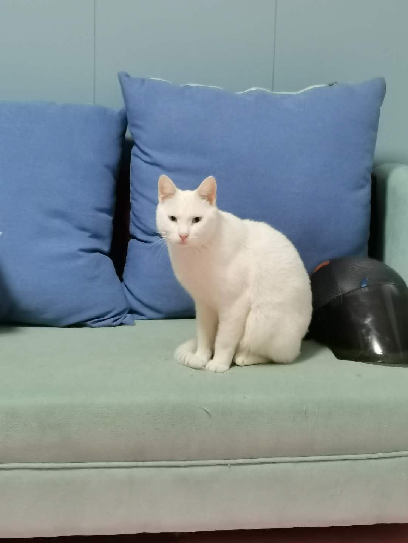 寻猫启示!
