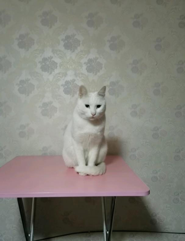 重金寻猫!