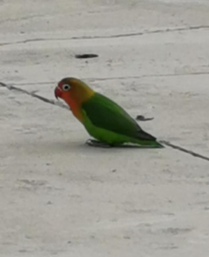 这是什么鸟,能养吗