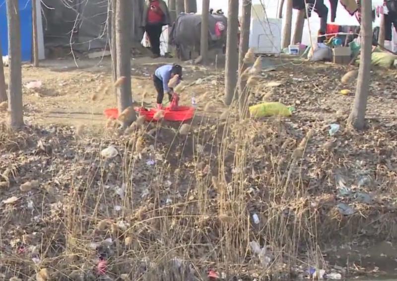 沭阳西圩乡这条河道水质被污染!