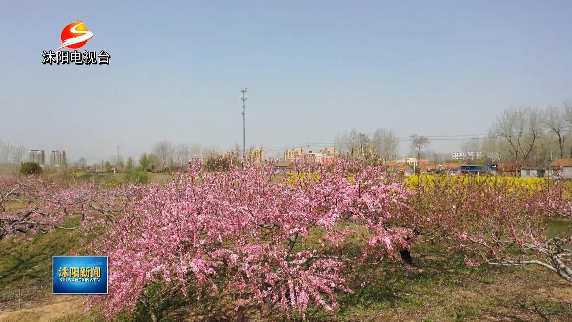 山上层层桃李花,云间烟火是人家!十字街道桃园几百亩桃花次第盛开!